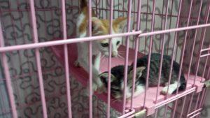Twee leuke kittens wachten op een nieuw huis.